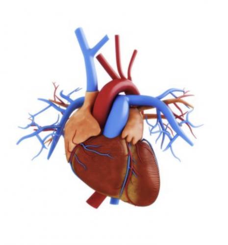 Fellowship Trained Cardiac Radiologists